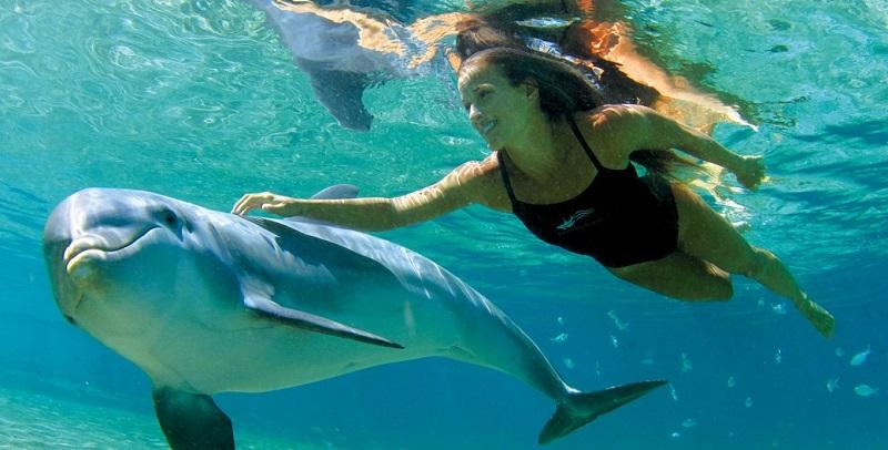 Mulher nadando com golfinho em Cancún