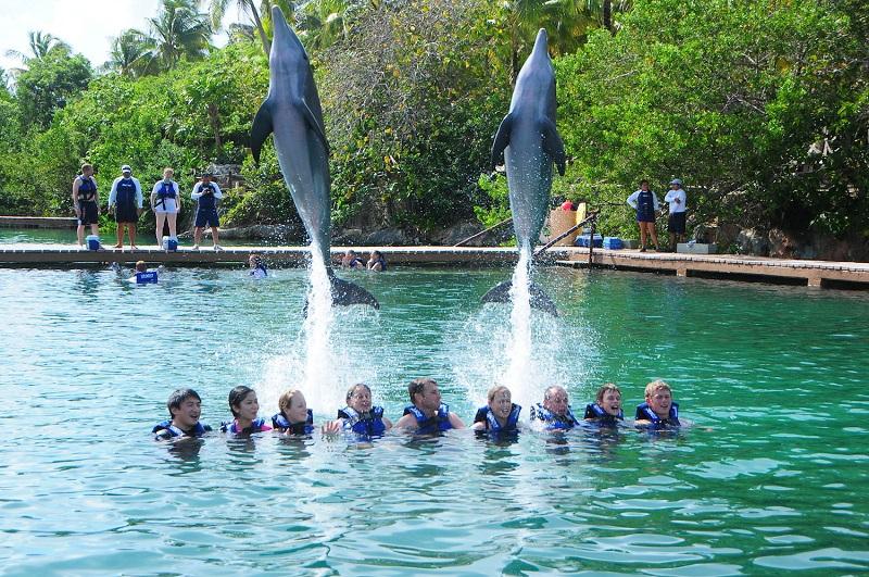 Nado com golfinhos no Xel-Há - Cancún