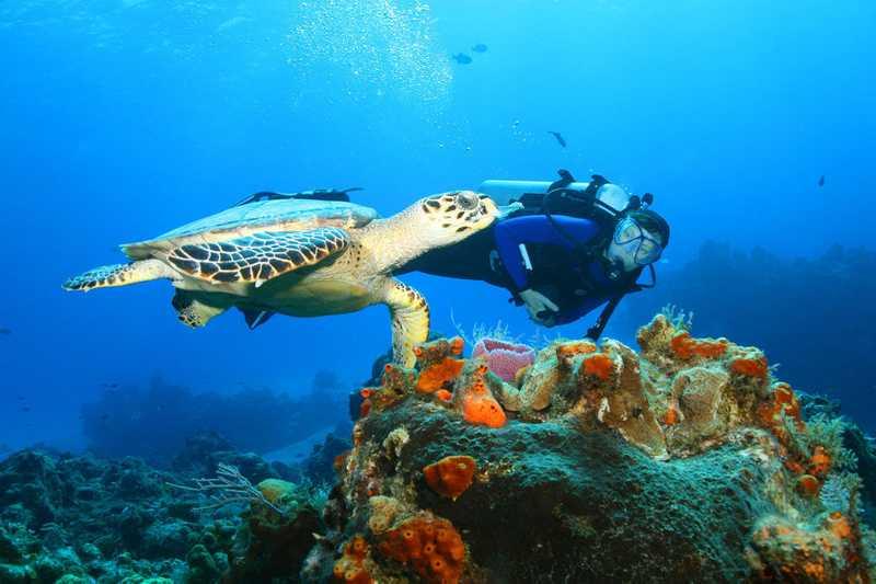 Mergulho em Cancún