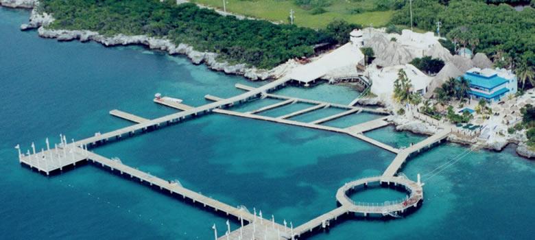 Onde nadar com golfinhos em Cancún