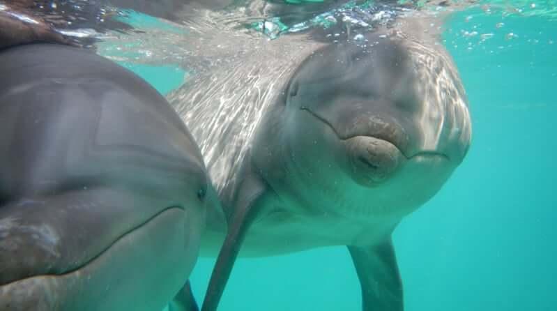 Atração nado com os golfinhos no Parque Garrafón Park em Cancún