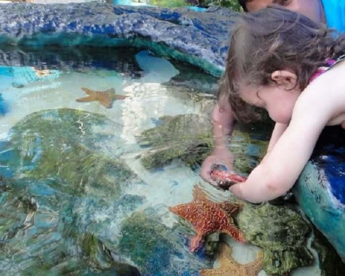 Diversão no Interactive Aquarium Cancún