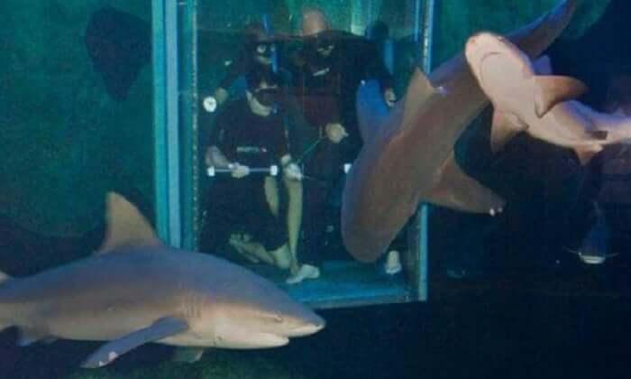 Nado com tubarões no Interactive Aquarium Cancún