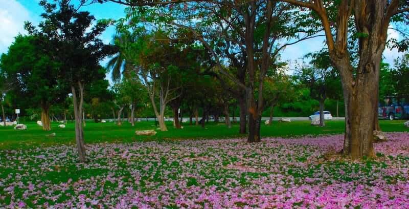 Atividades no Urbano Kabah Park em Cancún