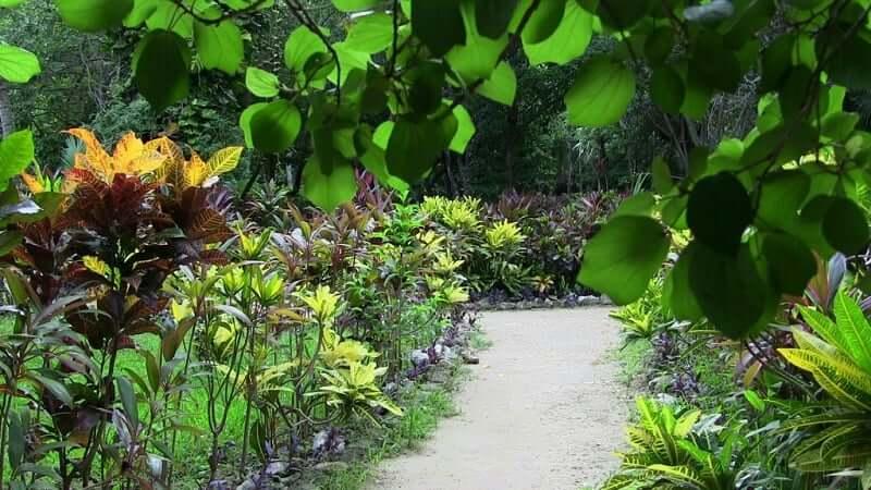 Fauna e flora no Urbano Kabah Park em Cancún