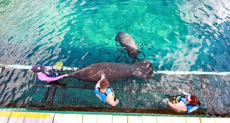 Atração nado com os leões marinhos no Parque Chankanaab Beach Adventure Park em Cancún