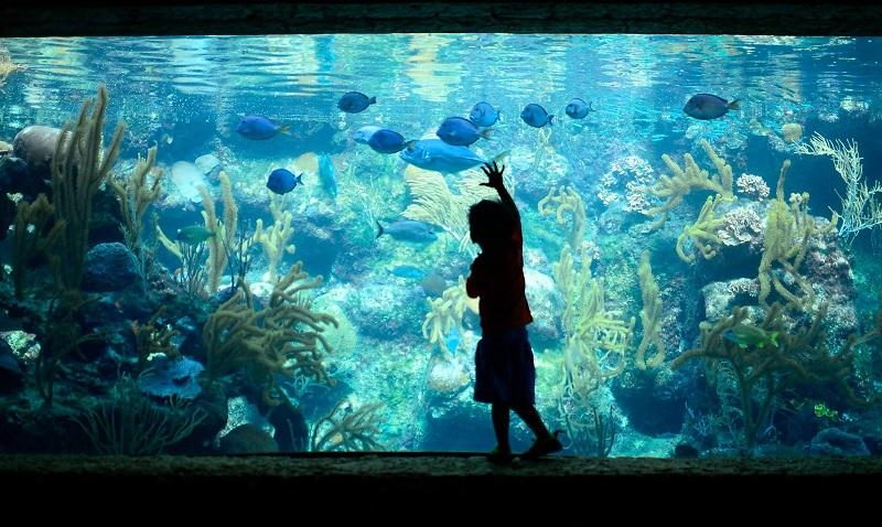 Coral Reef Aquarium no parque Xcaret