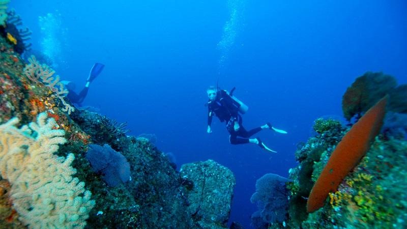 Mergulho no Parque Nacional Marinho Cabo Pulmo em Los Cabos