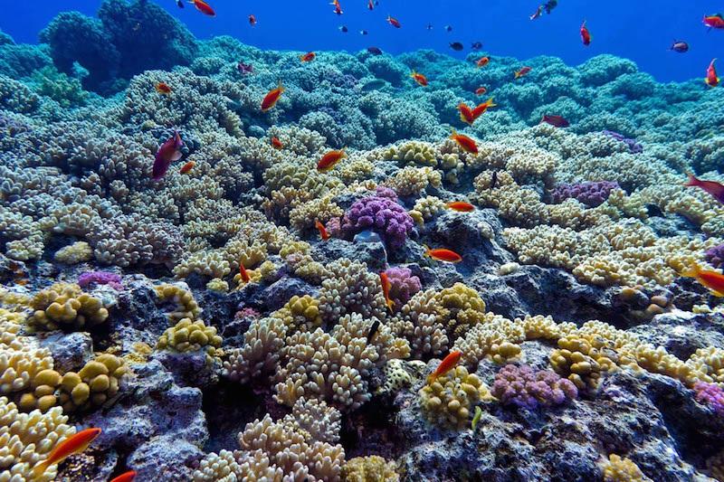 Vida marinha no Parque Nacional Marinho Cabo Pulmo em Los Cabos