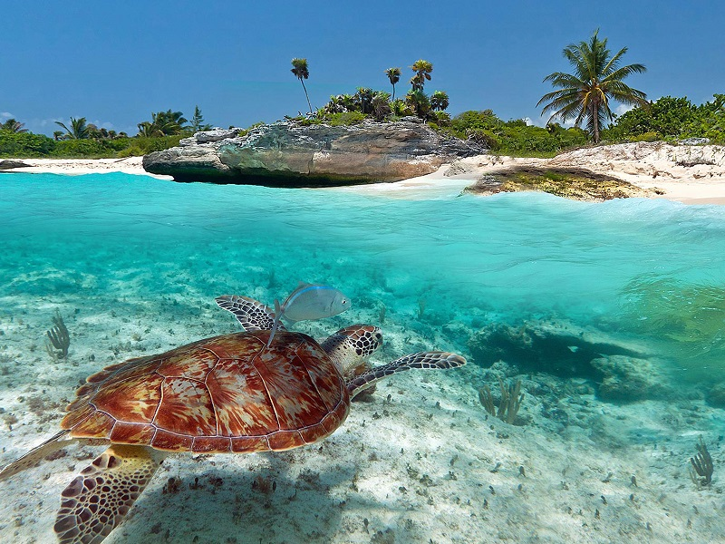 Praias mais bonitas do México: Playa Akumal em Riviera Maia