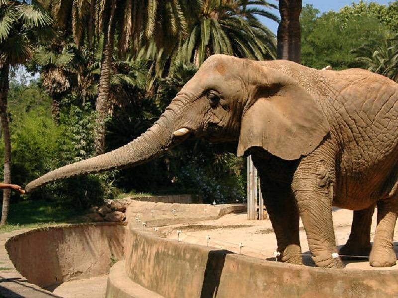 Animal no Zoológico de Chapultepec na Cidade do México