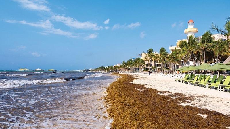 Sargaço em praia de Cancún